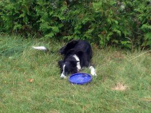 Luna mit Frisbee