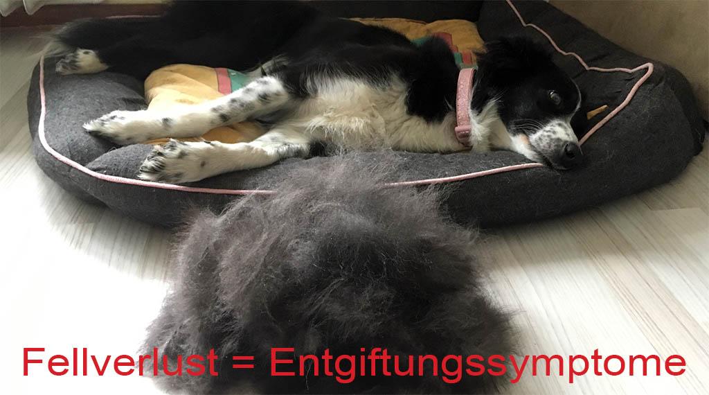 Fellverlust bei Luna - Entgiftungssymptome
